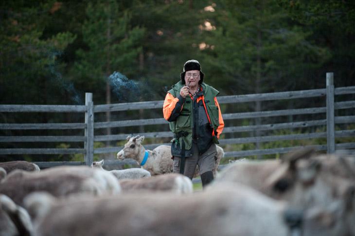 The Reindeer Herders #02
