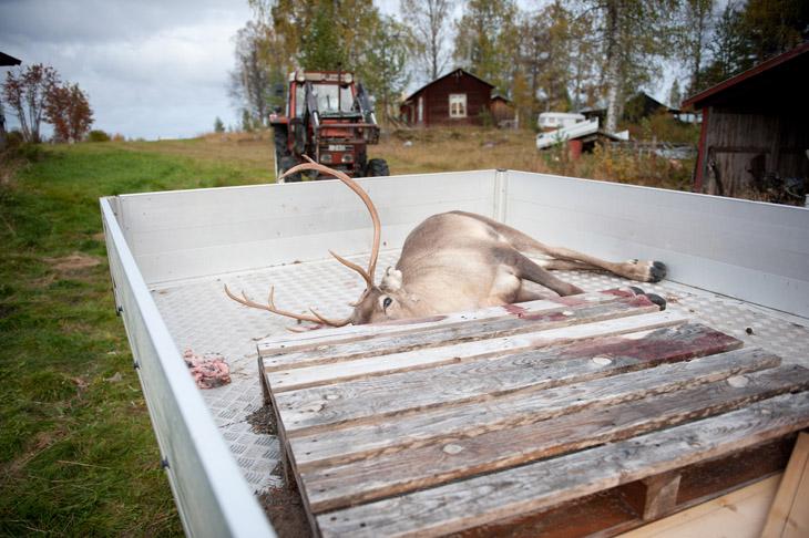 The Reindeer Herders #06
